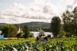 traktor i fält med broccoliodling