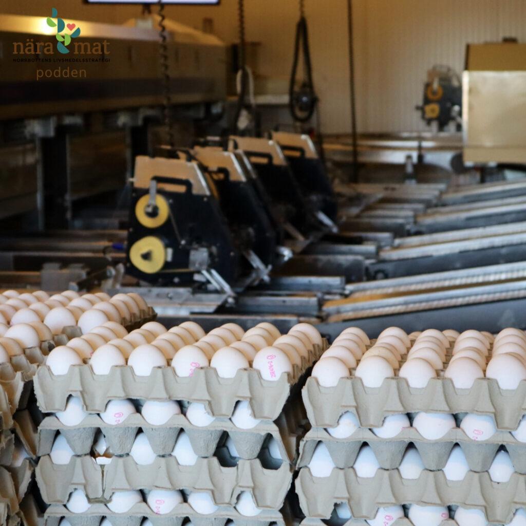 Äggproduktion