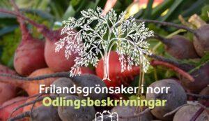 Frilandsgrönsaker i norr