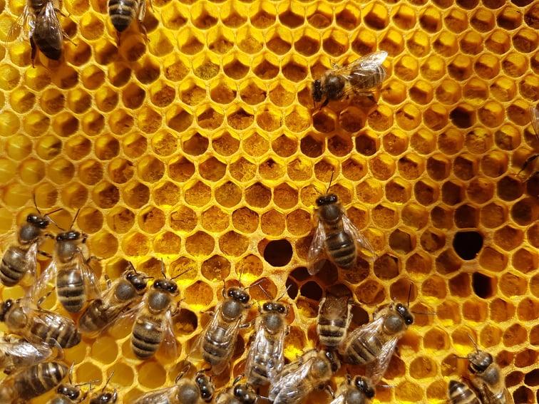 Bin på en pollenram