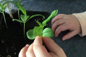 Ett barns hand som känner på en planta