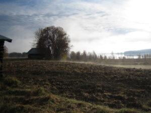 Ett jordbrukslandskap en dimmig morgon