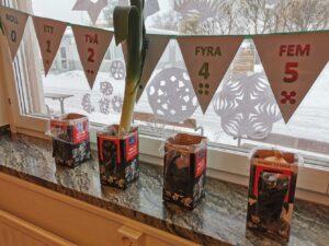 Gamla mjölkförpackningar ståendes i ett fönster där de används som krukor för odling.