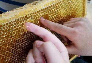 Två händer som petar i honungen i för att provsmaka